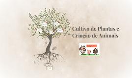 Cultivo de plantas e