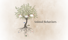 Animal Behaviors