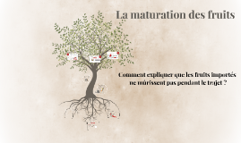 La maturation des fruits