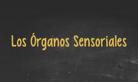 Los Órganos Sensoriales