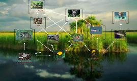 Copy of Everglades Keystone Project