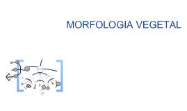 Copy of morfologia y taxonomia de las plantas