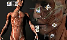 Copy of huesos de la cara y sus inervaciones.