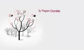 Le Phylum Chordata