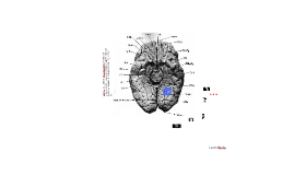 Haines, DE. (1995) Neuroanatomy, An Atlas of Structures, Sec