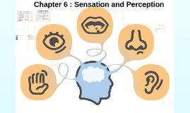 Chapter 4 : Sensation and Perception