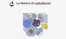 Copy of La Malaria