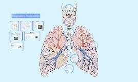 3: Respiratory examination