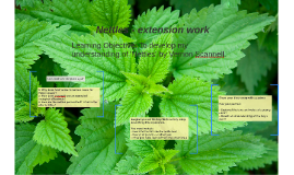 Nettles - extension work