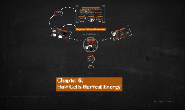 Chapter 6: How Cells Harvest Energy