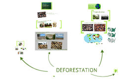 Copy of Deforestation
