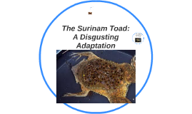 The Surinam: A Disgusting Adaptation