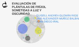 EVALUACIÓN DE PLÁNTULAS DE FRÍJOL SOMETIDAS A LUZ Y OSCURIDA