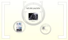 Neurulacion