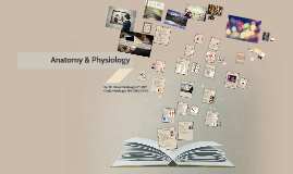 Copy of Anatomy and Physiology