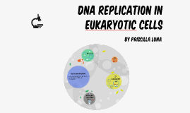 DNA Replication in Eukaryotic Cells
