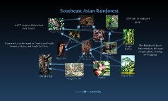Southeast Asian Rainforest