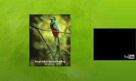 Resplendent Quetzal Feeding