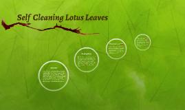 Self  Cleaning Lotus Leaves