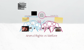 Animal Rights vs Welfare