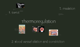 Copy of Thermoregulation
