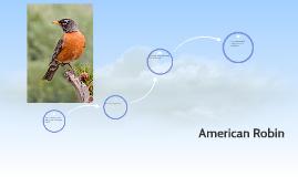 Student Project--American Robin