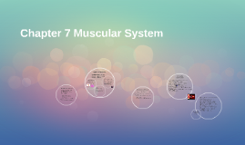 Chapter 7 Muscular System