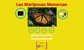Mariposas Monarcas