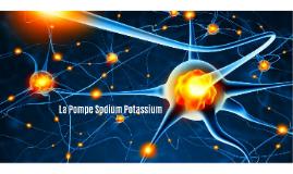 La Pompe Sodium Potassium