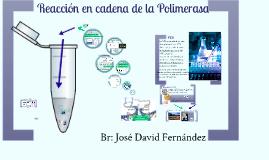 Reacción en cadena de Polimerasa