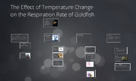 Copy of The effect of temperature change on the respiration rate of