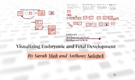 Visualizing Embryonic and Fetal Development