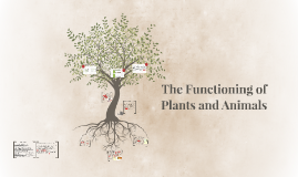 The Functioning of Plants and Animals