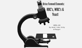 Urine Formed Elements: RBC's, WBC's & Yeast