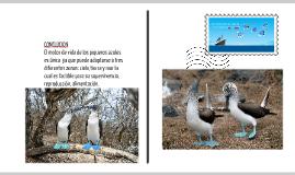 El caso de los piqueros de patas azules de Galápagos