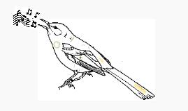 Birding Appstravaganza