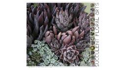 Linda Estrin :: Succulent Floral Arts (version 2)