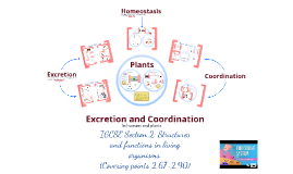 Excretion and Coordination