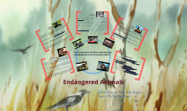 Copy of Endangered Animals