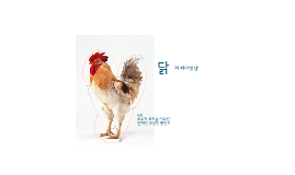 닭의 배아발생과정