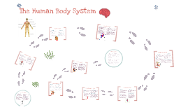 Copy of The Human Body System