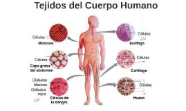El tejido cartilaginoso, o cartílago, es un tipo de tejido c