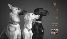 Bérdi Fruzsina - A kutya mint tünethordozó