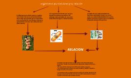 organismos pluricelulares y su relación