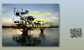 presentación Rainforest Alliance Ecuador 2012