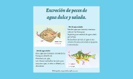 Excreción de peces de agua dulce y salada. by Jorge..