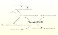Science Mind Map Photsynthsis