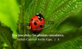 Los insectos y las plantas vasculares.