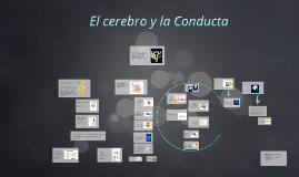 Copy of El cerebro y la Conducta