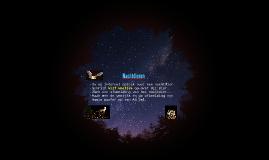 nachtdieren